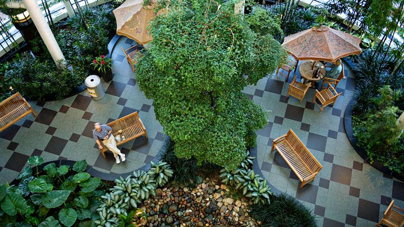 An aerial view of the Cardiovascular Center atrium with tropical plants and picnic tables