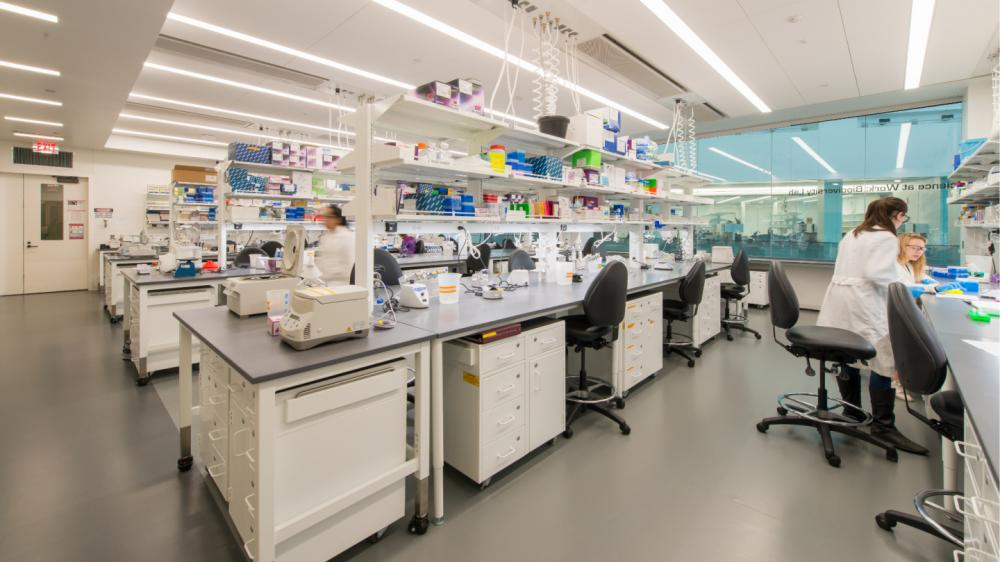 People working in a lab space