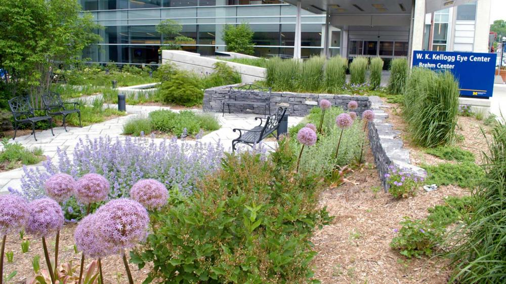 Outdoor garden space with metal benches, paved walkways, green foliage and lots of purple flowers in bloom